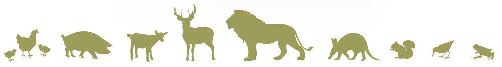Wildlife Rescue & Rehabilitation animal icons
