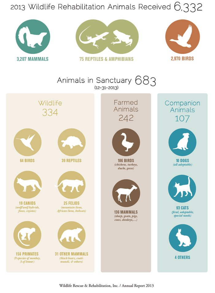 Wildlife Rescue & Rehabilitation annual report page layout