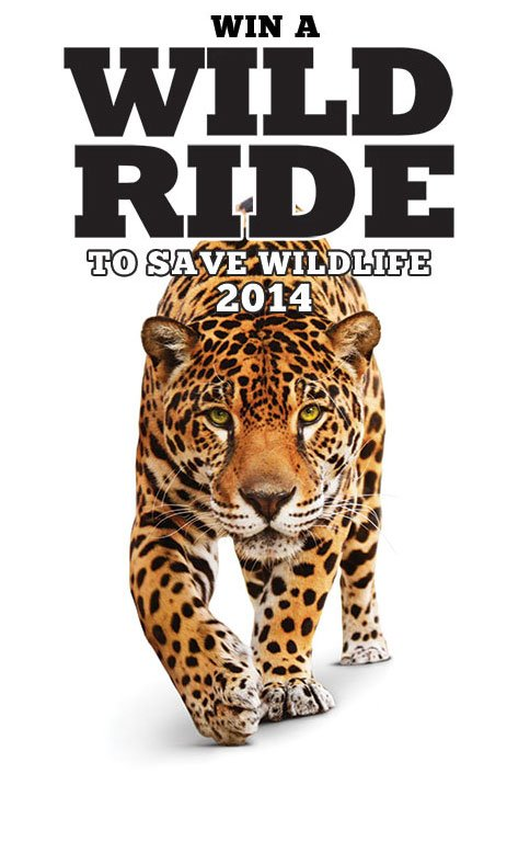 Wildlife Rescue & Rehabilitation program cover